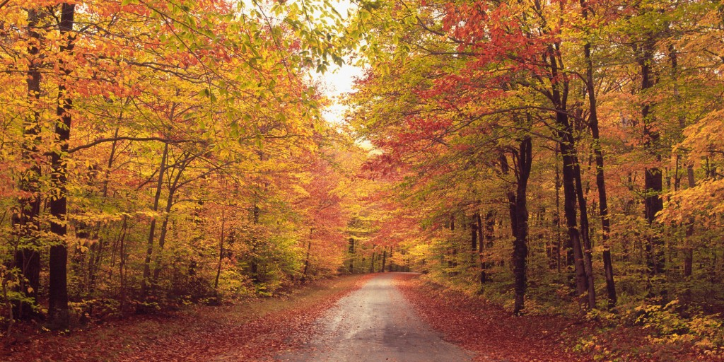 Oh well, it was first day of autumn yesterday! (courtesy of: wallpapersrow.com)
