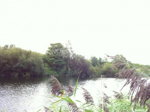 One of the titular lakes of Bedfont Lakes Country Park