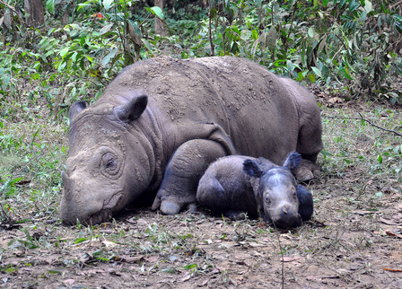 Ratu_and_Baby_SRS_YABI_Dedi_Candra_0623_2012_02_low_res_medium