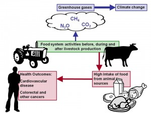meat production diagram