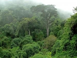 WED rainforest