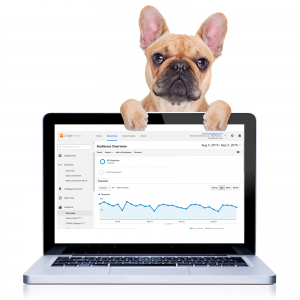Dog behind a laptop showing Google Analytics