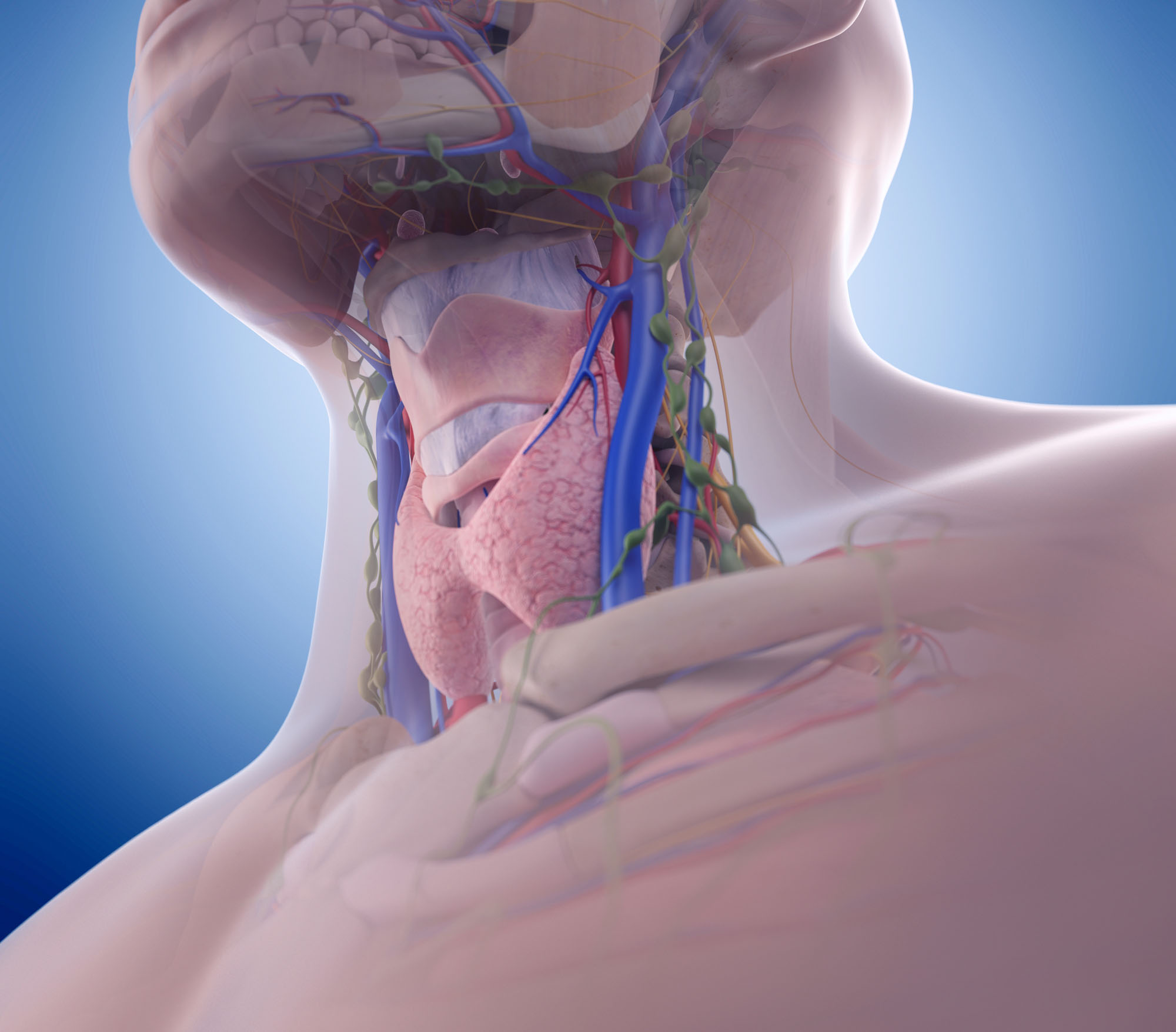 Laryngectomy: rehabilitation and surgical voice restoration ...