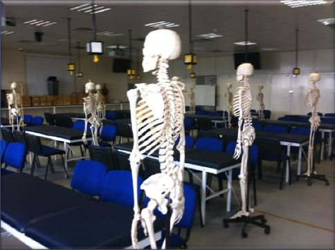 Anatomy in Year 1 and 2 MBBS/BSc - FoM Staff Blog
