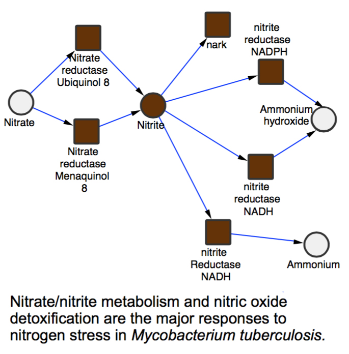 Deciphering the metabolic response of Mycobacterium tuberculosis to nitrogen stress