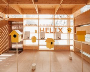 A photograph of the hearing birdsong installation, showing the yellow bird boxes