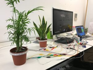 A photograph of plants connected to a computer that could be used in a children's hospice