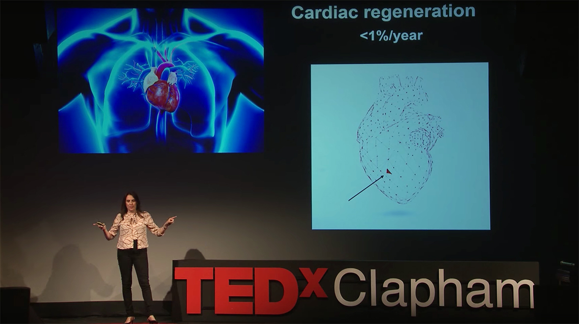 Building a heart, one cell at a time