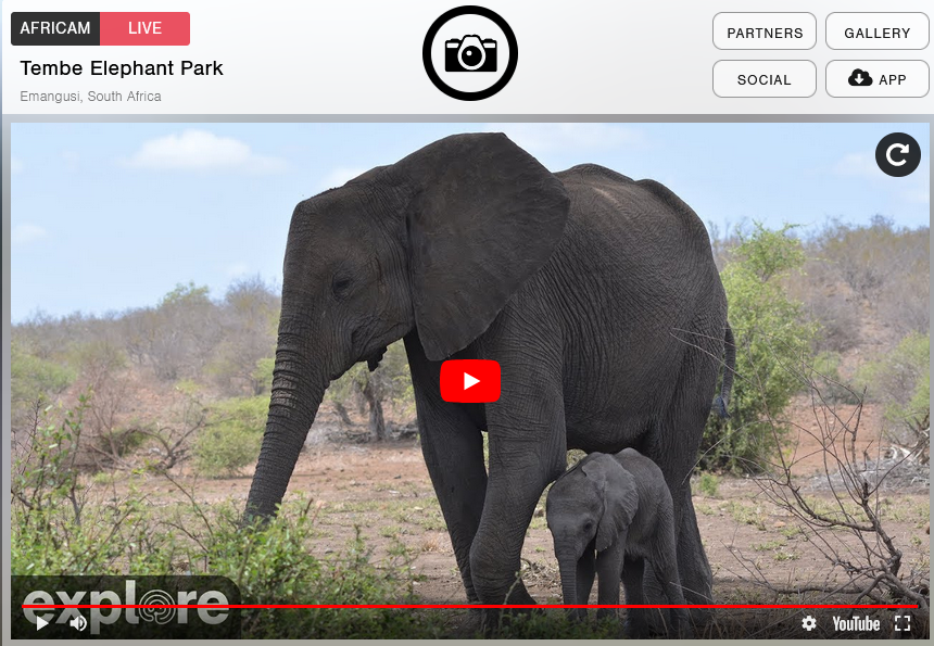 A clip of the screen when you visit the webcam of Tembe Elephant Park