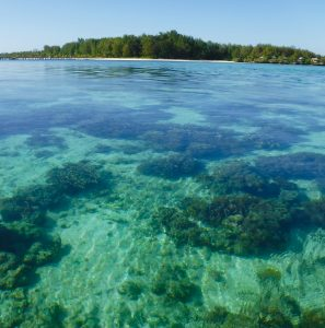 An image of Hoga Island showing the beautiful clear bluey, green sea