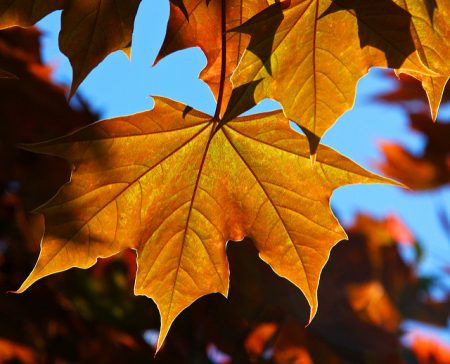 A photograph of autumn leaves