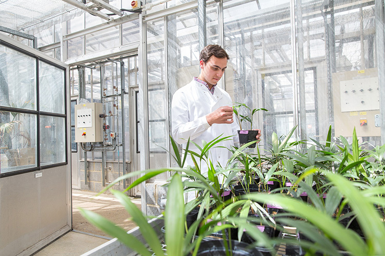 A student examines a plant in a greenhouse.