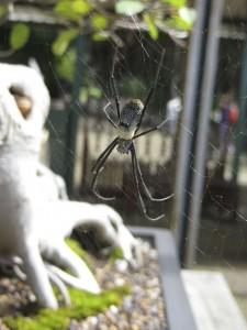 Big spider at Botanical Gardens