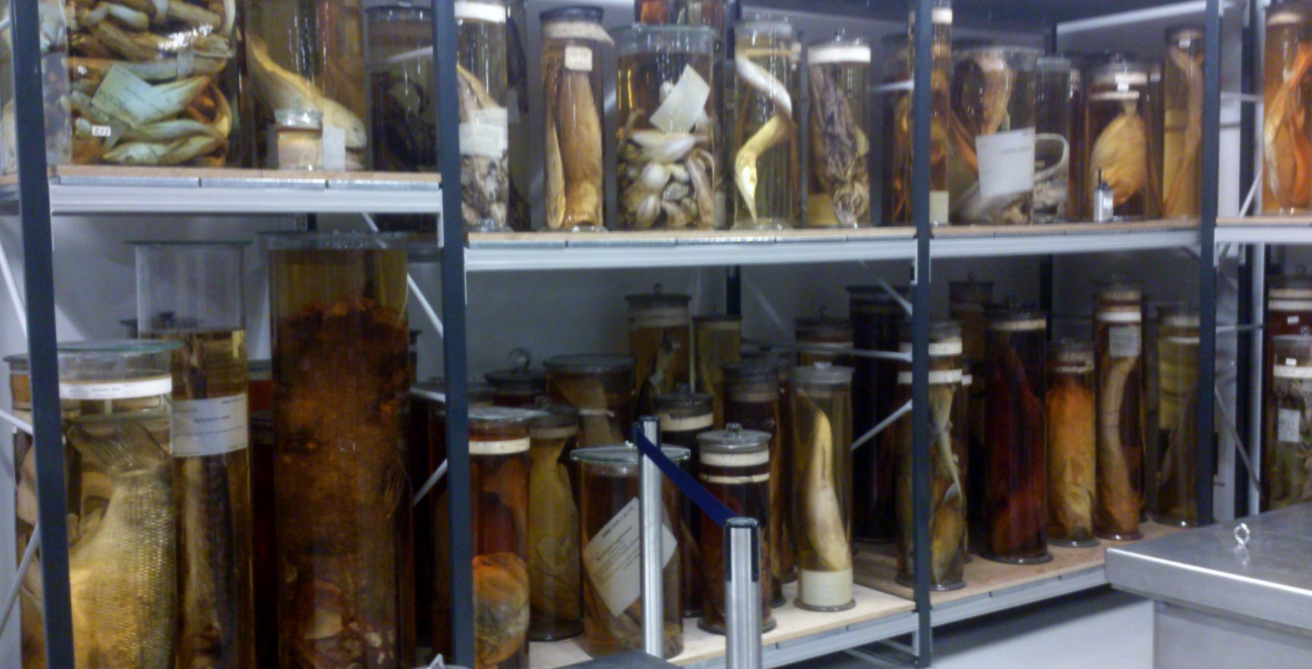The Natural History Museum's tank room, where thousands of specimens are preseved