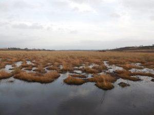 Bog pools at Hartland Moor