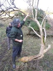Fred shows us epiphytic mosses on elder