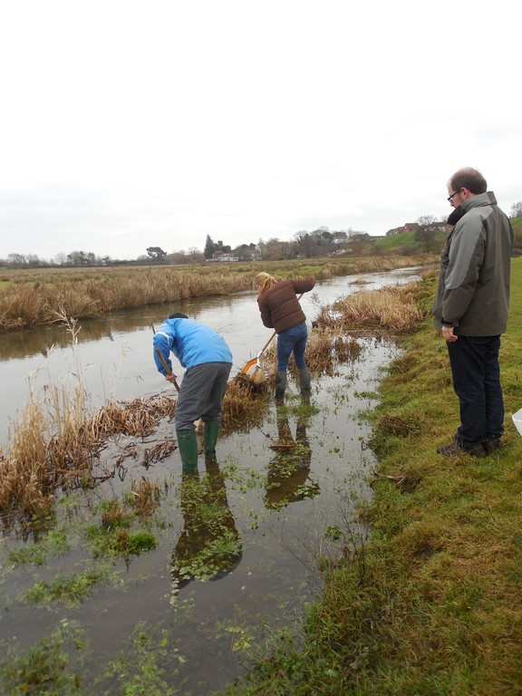 Sampling for freshwater animals in the River Piddle, Dorset