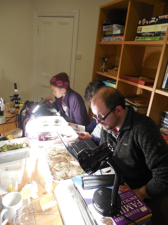 Identifying algae back in the 'lab' at the Old Malthouse