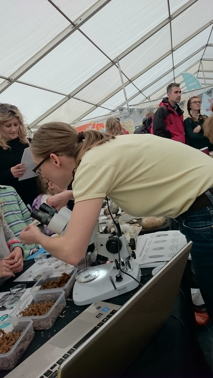 Silvia introducing the public to soil and leaf litter invertebrates
