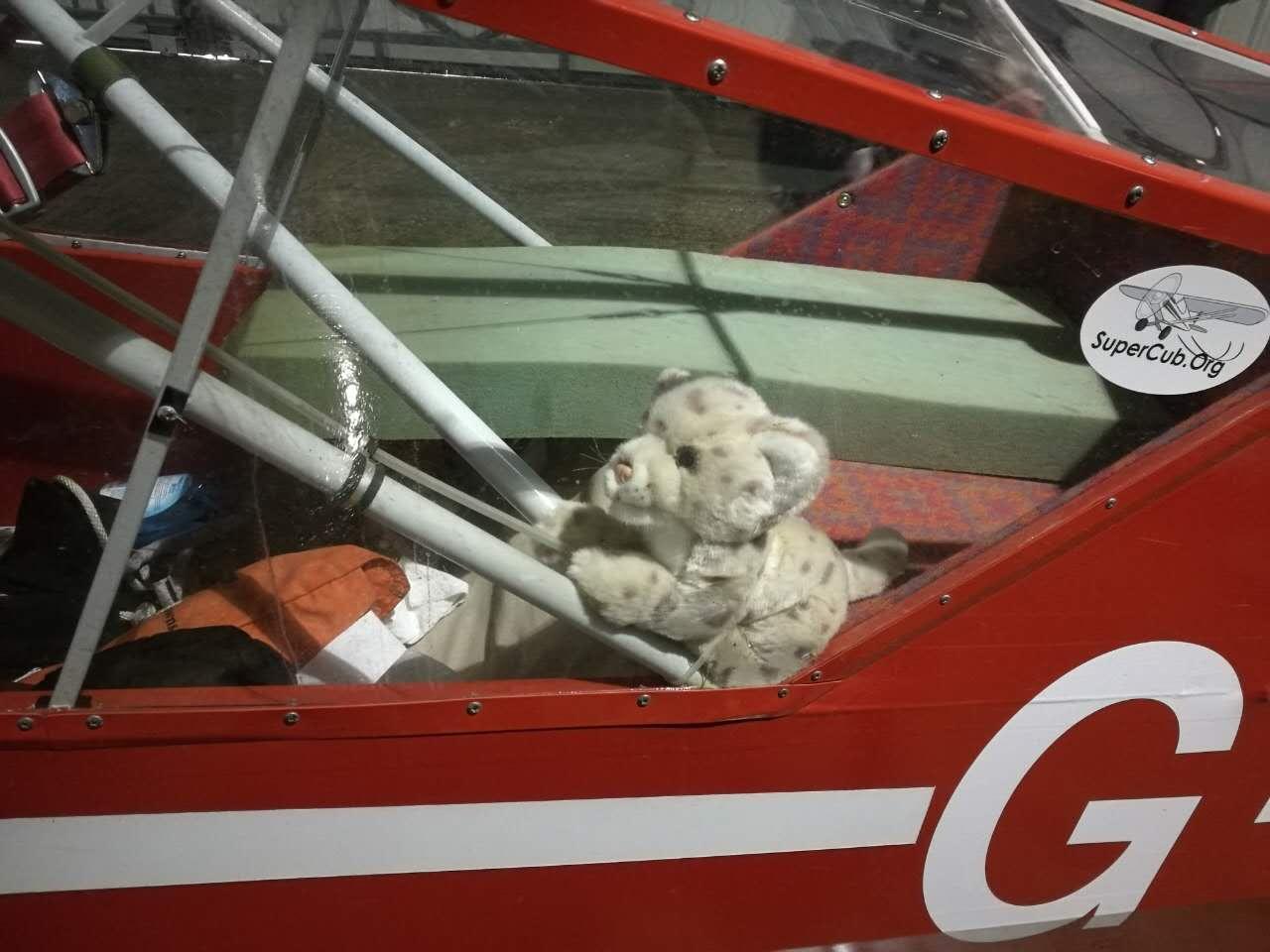 bear-in-cockpit